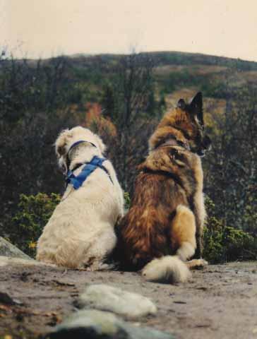 Doggy og Aika